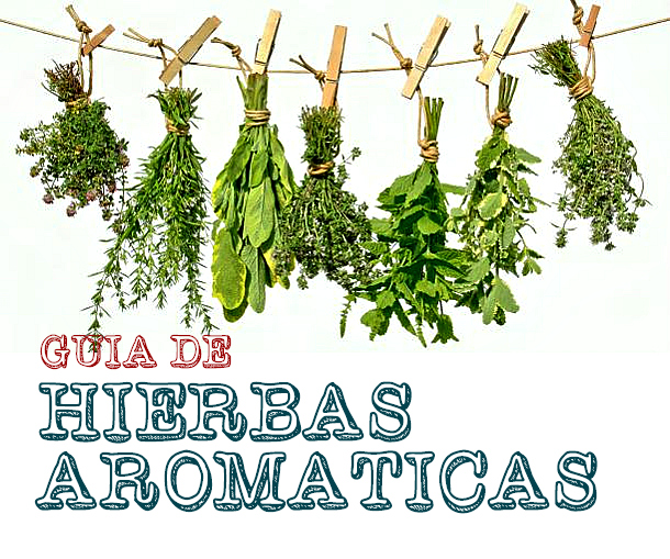 Guía de hierbas aromáticas